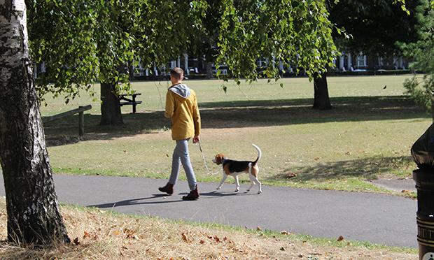 Dog Walker Clissold Park